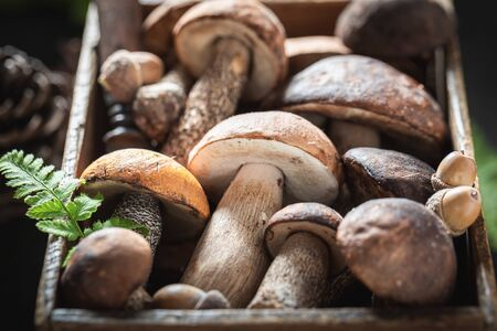 Closeup of various wild mushrooms in old wooden box Stock Photo