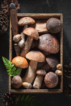 Mix of noble wild mushrooms in old wooden box Stockfoto