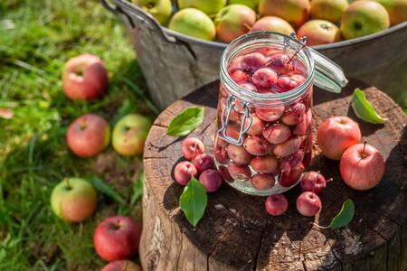 Preparation for canned apples in the jar in garden