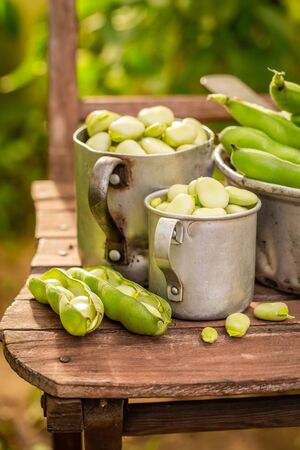Closeup of raw broad beans in summer