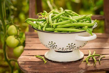 Closeup of green beans in a summer greenhouse Reklamní fotografie