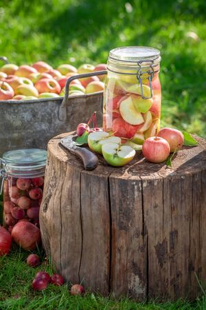 Preparation for homemade and sweet apples compote in summer Banco de Imagens
