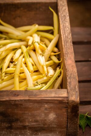 Freshly harvested yellow beans in a old wooden box Reklamní fotografie - 130116011
