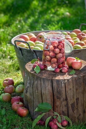 Ingredients for canned apples in the green garden Banco de Imagens
