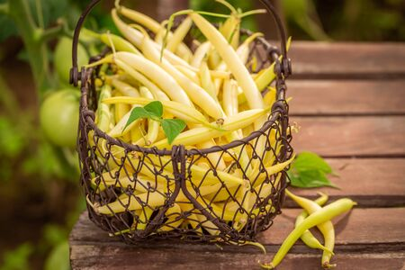 Closeup of healthy yellow beans in an old wire basket Reklamní fotografie - 130116021