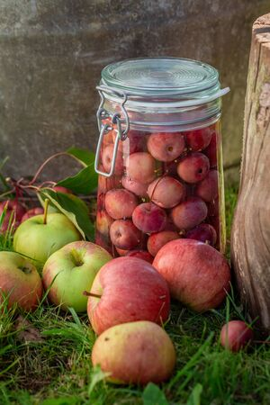 Homemade and tasty canned apples in the green garden