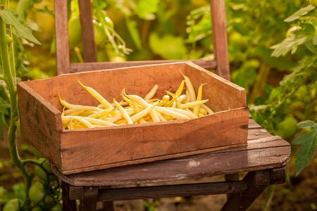 Fresh and raw yellow beans in a old wooden box Reklamní fotografie - 130116032