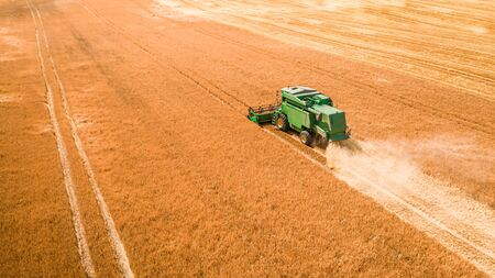Flying above green harvester harvesting seed in Poland Stock Photo