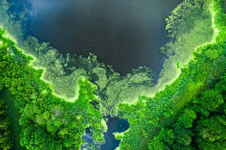 Beautiful blooming algae on the lake in summer, flying above 写真素材