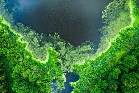 Hermosas algas en flor en el lago en verano, volando por encima Foto de archivo
