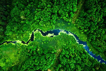 Amazing blooming algae on the river in summer, flying above Reklamní fotografie