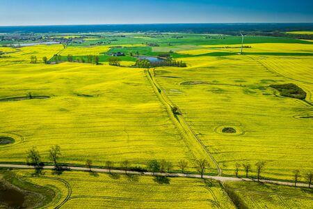 Flying above yellow rape fields and wind turbine, Europe Banco de Imagens