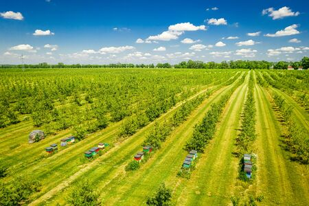 Beehives among the orchard with fruit trees, aerial view Imagens
