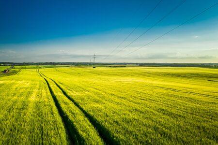 Field of wheat and power lines at sunset, aerial view Reklamní fotografie