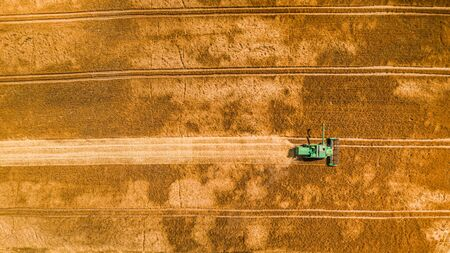 Flying above small combine harvesting on big field, Poland