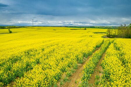 Aerial view of yellow rape fields in spring, Europe