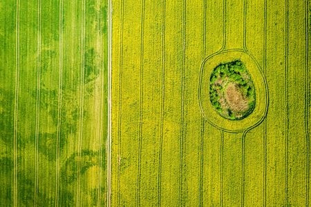 Flying above yellow and green rape fields in summer, Poland Standard-Bild - 130454082