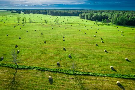 Sheaves of hay on green field in summer in Poland