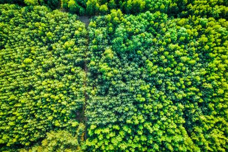 Top view of green forest in summer, aerial view Reklamní fotografie