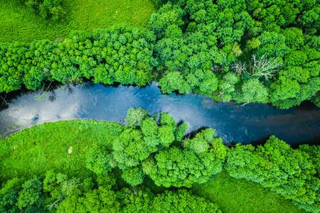 Green forest and river in Tuchola natural park, from above
