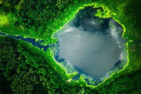 Stunning blooming algae on the lake in summer, flying above Reklamní fotografie