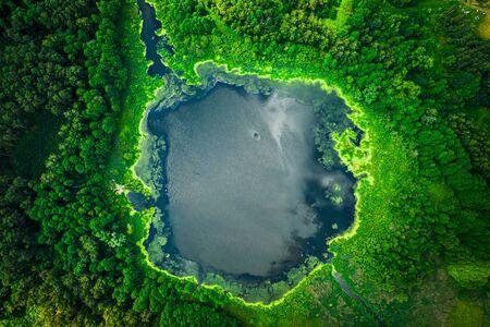 Amazing green algae on the lake in summer, flying above Reklamní fotografie