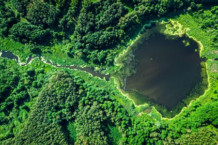 Beautiful blooming algae on the lake in summer, aerial view Stock fotó
