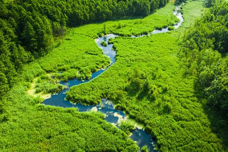 Green swamps and small winding river, view from above
