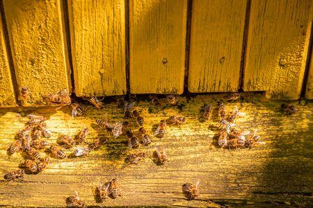 Old beehives full of bees in summer garden Zdjęcie Seryjne