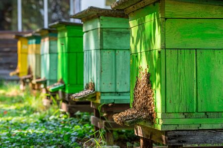 Colorful apiary with bees in countryside, Poland