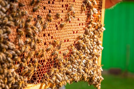 Closeup of frame with honey and bees in sunny day Banque d'images - 132073255