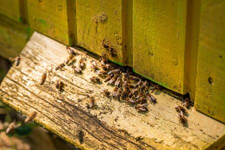Ecological apiary full of bees in summer garden