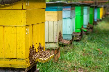 Handmade beehives with bees, summer in countryside