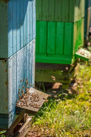 Closeup of old beehives in the summer garden Banque d'images - 132234586