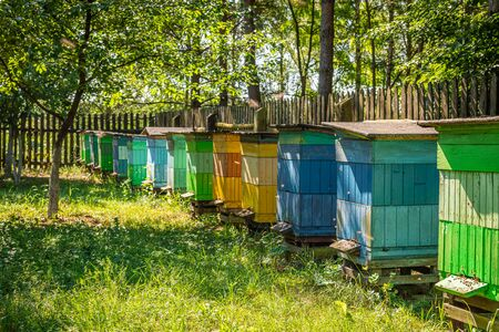 Old apiary in the summer garden, Europe