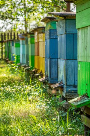 Wooden apiary in the summer garden, Europe