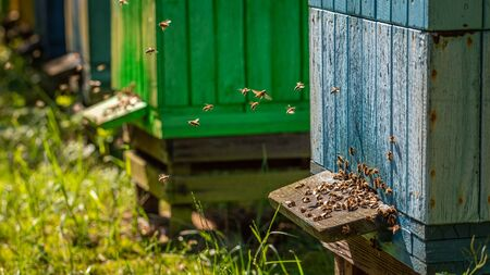 Ecological apiary in summer sunny day, Poland Banque d'images - 132234598