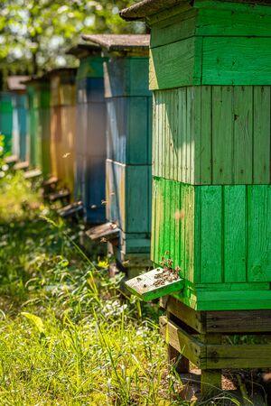 Wooden beehives full of bees in summer garden