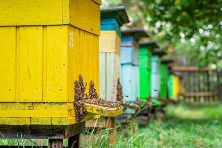Colorful apiary in countryside, Poland in summer