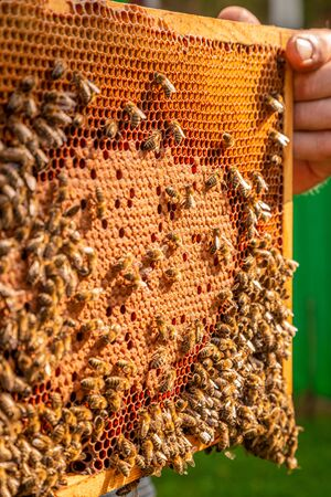 Frame with honey and bees in summer Banque d'images - 132073636