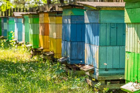 Ecological beehives in summer sunny day, Poland Imagens