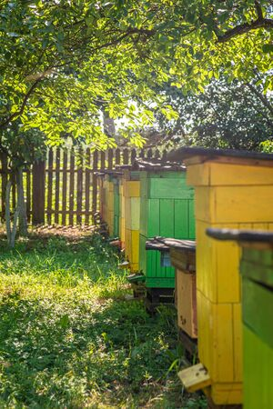 Wooden apiary full of bees in summer garden Zdjęcie Seryjne