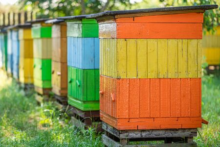 Handmade beehives in the summer garden, Poland