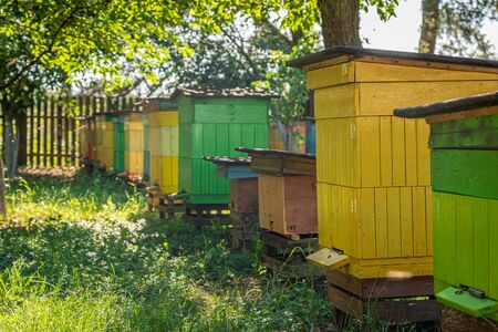 Wooden beehives with bees, summer in countryside Zdjęcie Seryjne