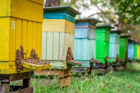 Ecological beehives with bees, summer in countryside