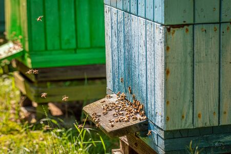 Wooden apiary in countryside, Poland in summer Zdjęcie Seryjne