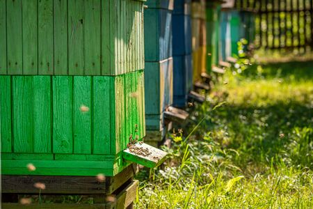 Ecological apiary with bees, summer in countryside