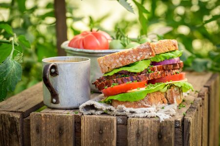 Sandwich with tomato, ham and cheese in summer greenhouse