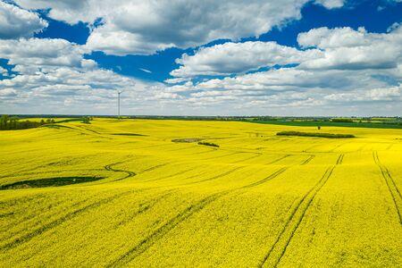 Aerial view of stunning yellow rape fields, Poland Banco de Imagens