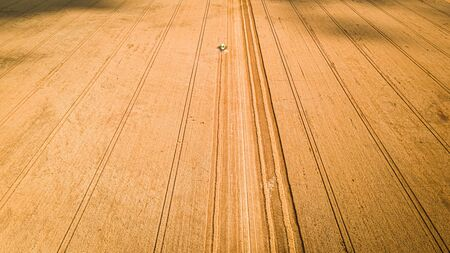 Small green combine harvesting field in summer, aerial view